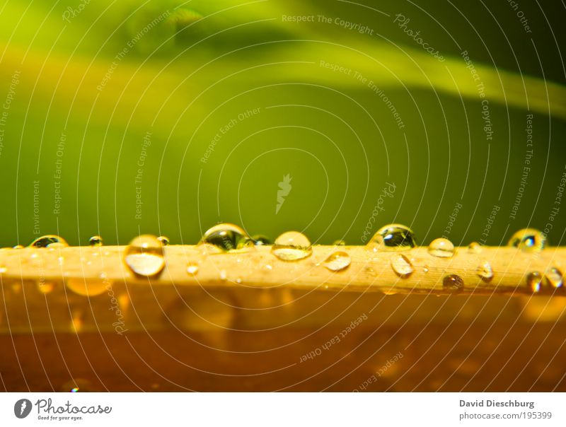 Nature Green Summer Plant Leaf Yellow Life Spring Line Rain Wet Drops of water Virgin forest Damp Dew