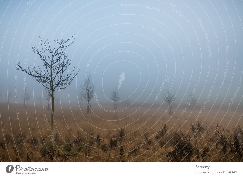 Foggy prospects Environment Nature Landscape Plant Autumn Tree Grass Bushes Meadow Field Calm Colour photo Exterior shot Deserted Day Light (Natural Phenomenon)