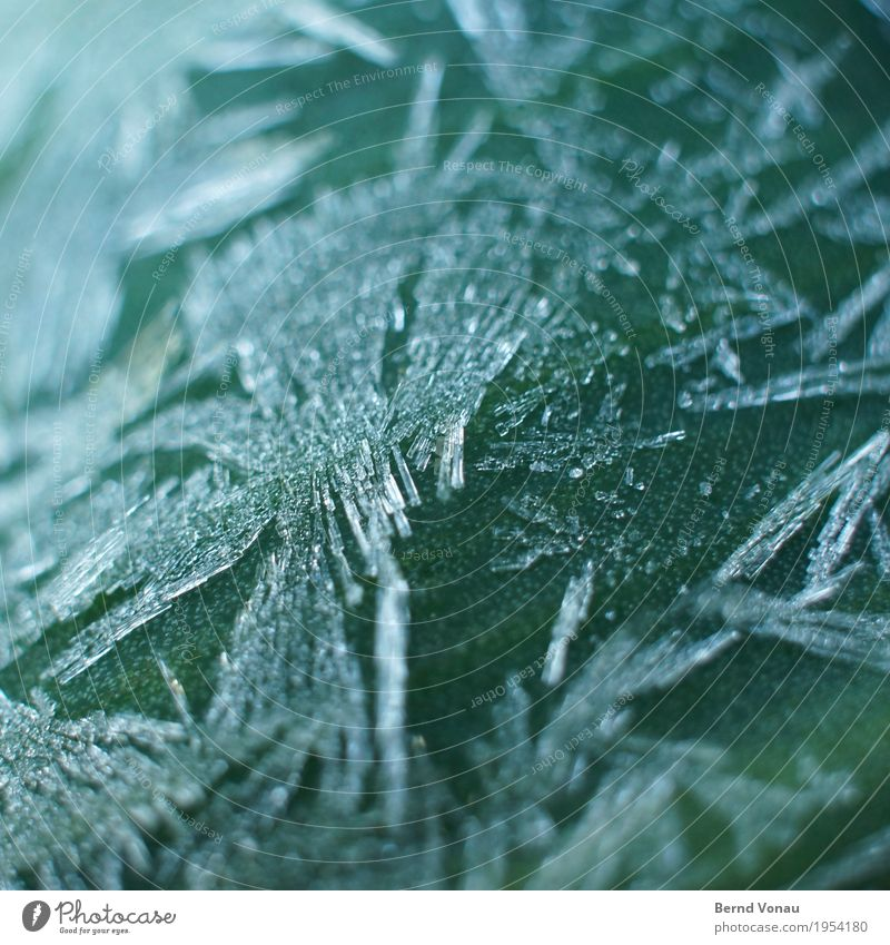 frost Environment Nature Winter Plant Cold Ice crystal Frost Leaf green Green Fine Transparent Delicate morningfrost Colour photo Exterior shot