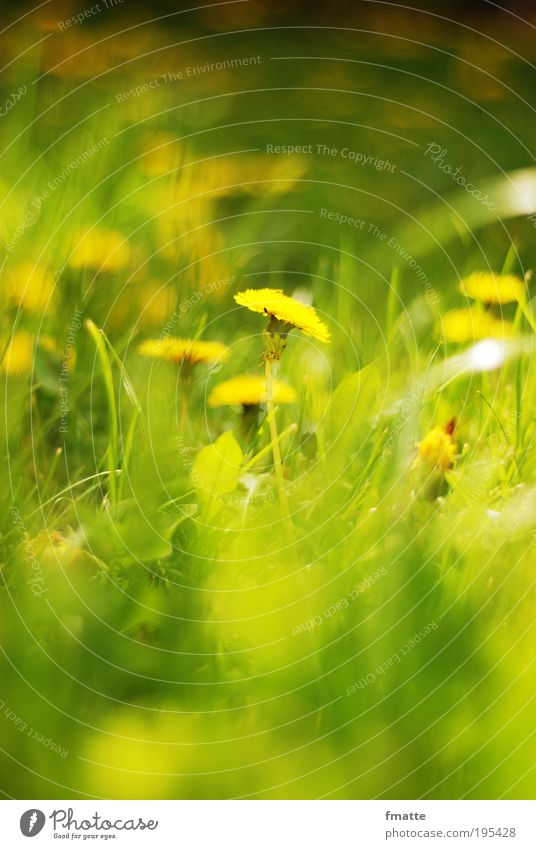 Nature Sun Green Plant Summer Meadow Blossom Spring Contentment Moody Environment Fresh Esthetic Soft Dandelion Positive
