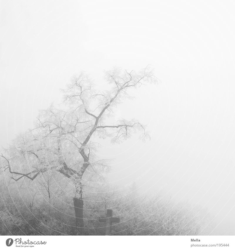 morning calm Environment Nature Landscape Winter Climate Climate change Weather Fog Ice Frost Plant Tree Bushes Sign Crucifix Creepy Bright Cold Gloomy Gray