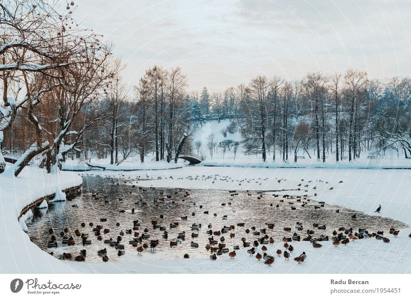 Ducks And Seagull Birds On Frozen Lake In Winter Sky Nature Blue Beautiful Water White Landscape Clouds Animal Far-off places Environment Snow Natural