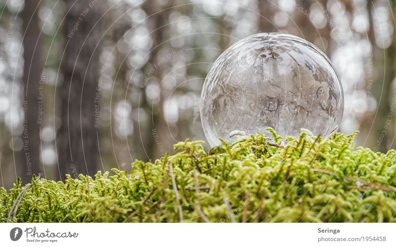 Thin-skinned Nature Water Winter Ice Frost Snow Sphere Esthetic Soap bubble Frozen Freeze Lie Exceptional Beautiful Uniqueness Cold Gray White Ice crystal