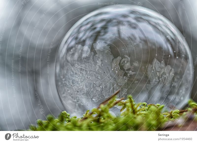 Soap bubble in frost coat Nature Landscape Winter Ice Frost Snow Moss Observe Freeze Esthetic Exceptional Elegant Firm Beautiful Cold Round Gray Green White Lie