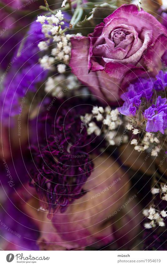 Plant Blue Beautiful White Eroticism Blossom Love Natural Feminine Death Elegant Blossoming Romance Soft Grief Violet