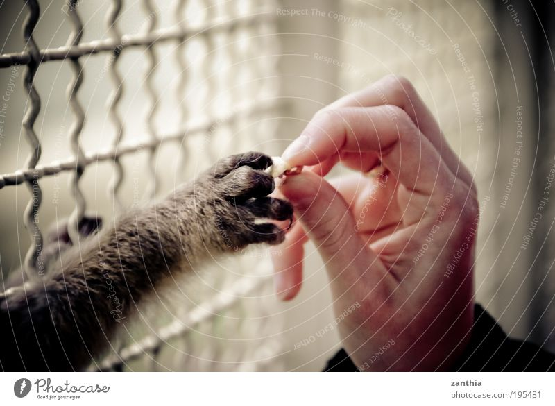 food Hand Fingers Animal Wild animal Pelt Claw Paw Zoo Petting zoo Monkeys 1 Cage Feeding Poverty Brown Gray Black White Acceptance Trust Love of animals