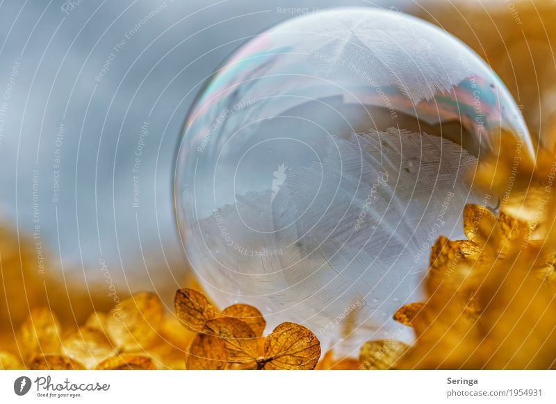 Soap bubble in frost coat 4 Nature Landscape Plant Winter Ice Frost Snow Observe Freeze Glittering Lie Looking Illuminate Esthetic Exceptional Thin Fantastic