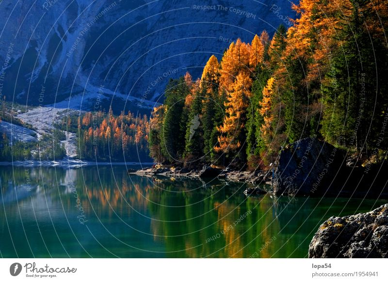 Autumn atmosphere at Pragser Wildsee, Dolomites, South Tyrol Environment Nature Landscape Plant Water Sunlight Beautiful weather Tree Foliage plant Larch Rock