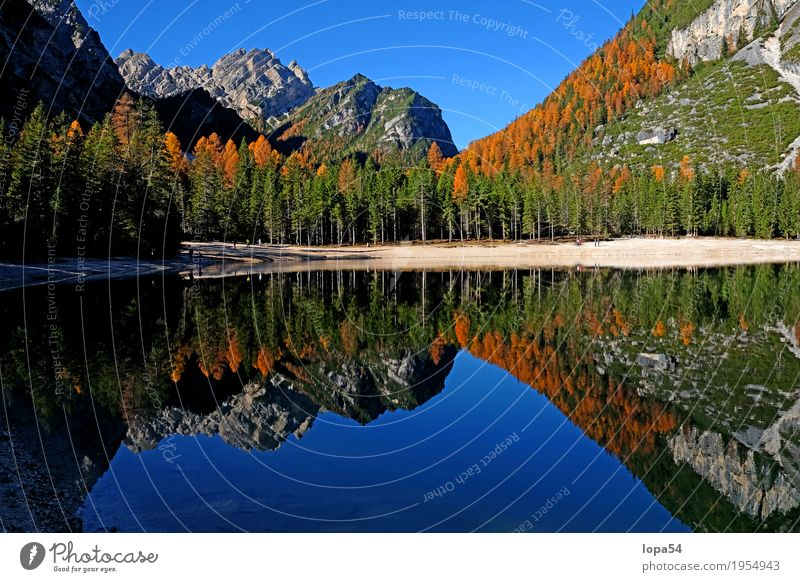 Autumn atmosphere at Pragser Wildsee, Dolomites, South Tyrol Environment Nature Landscape Water Sky Cloudless sky Sunlight Beautiful weather Tree Larch Rock