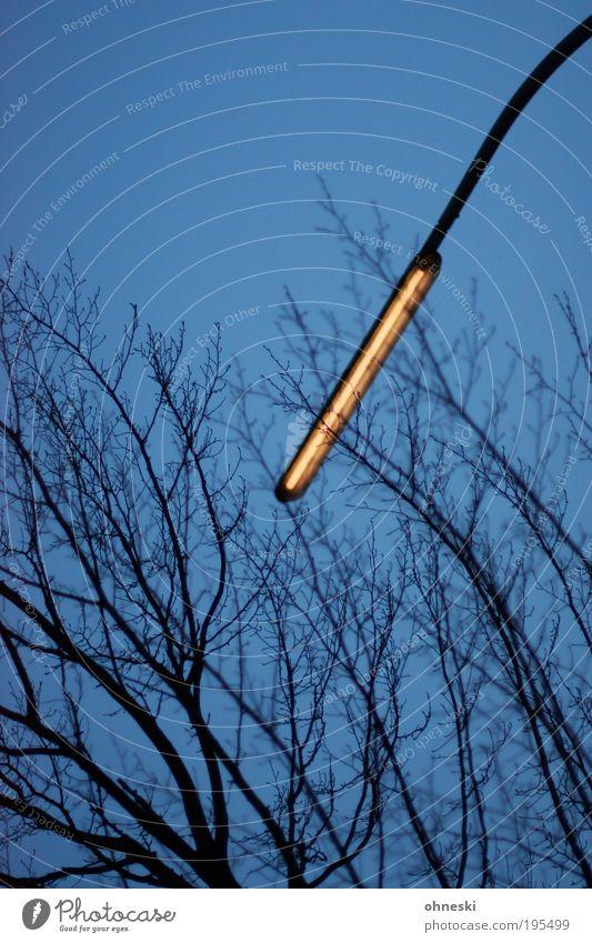 Sky Nature Tree Dark Environment Climate Branch Lantern Street lighting Cloudless sky