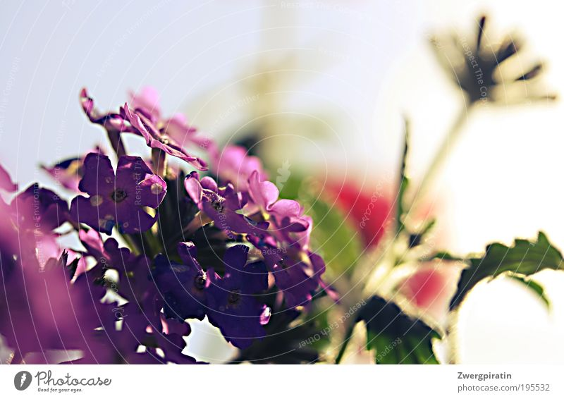 Summer, come back! Fragrance Sun Nature Plant Sky Beautiful weather Warmth Blossom Pot plant Blossoming Hang Illuminate Growth Fresh Hot Bright Happiness
