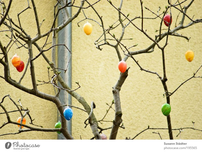Green Tree Yellow Wall (building) Decoration Easter Painting (action, work) Hide Egg Hang Barn fowl Public Holiday Conduit Nest Hiding place