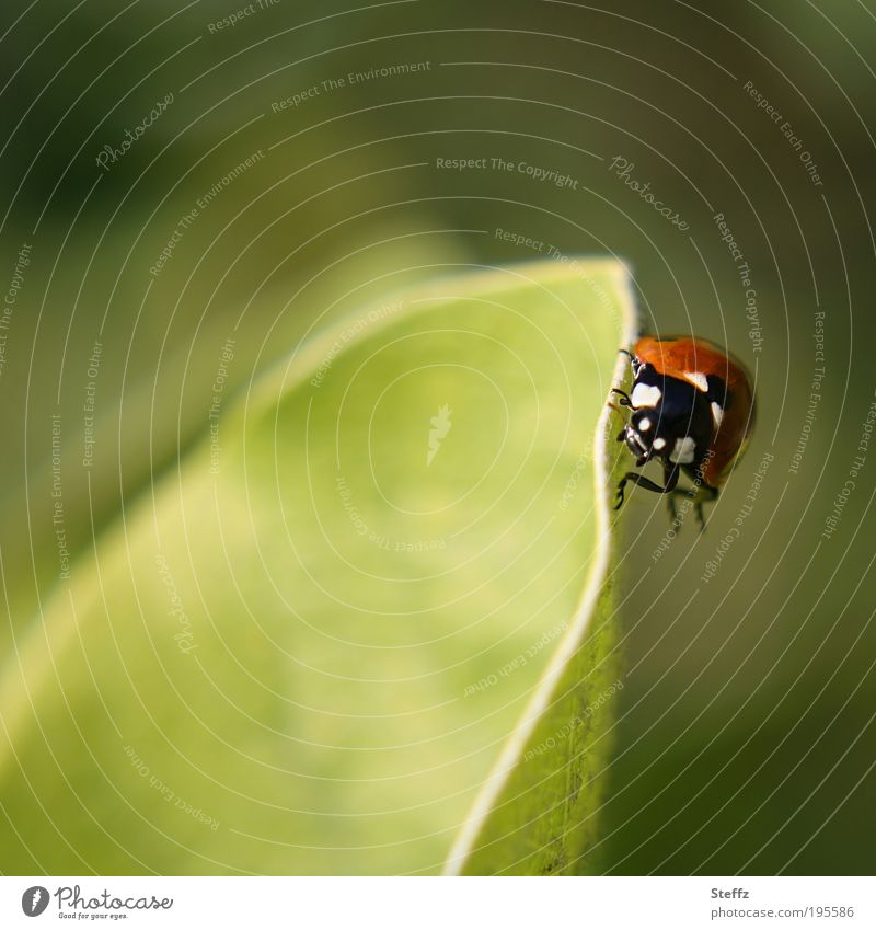 oblique position Ladybird obliquely To hold on balance fit Happy Good luck charm symbol of luck Easy Congratulations balancing act Crawl Balance Ease
