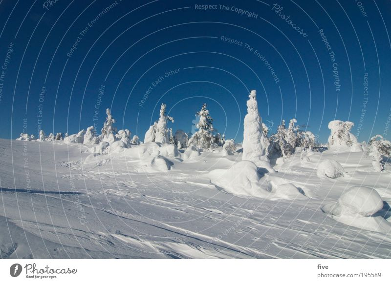 luosto II Vacation & Travel Tourism Far-off places Winter Snow Winter vacation Mountain Nature Landscape Sky Cloudless sky Beautiful weather Ice Frost Plant