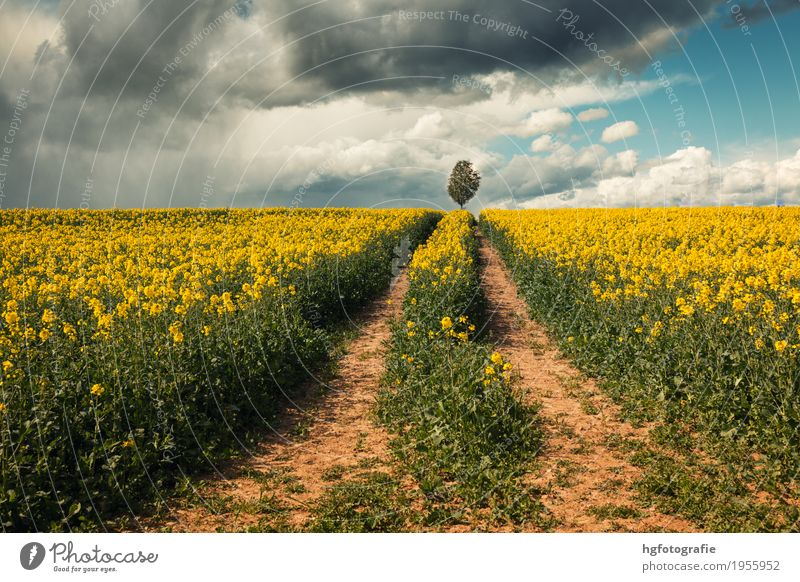 routes Nature Landscape Earth Sky Clouds Spring Climate Weather Beautiful weather Plant Agricultural crop Canola field Oilseed rape flower Field Touch Movement