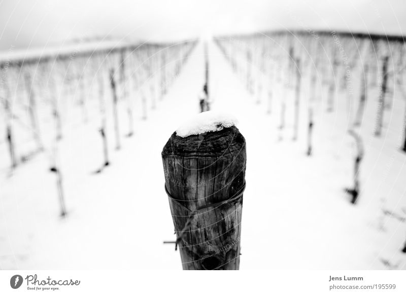 From Pole to Pole Landscape Snow Vineyard Old Black White Loneliness Cold Regular Vanishing point Wood Structures and shapes Wire Barbed wire Gloomy Hill