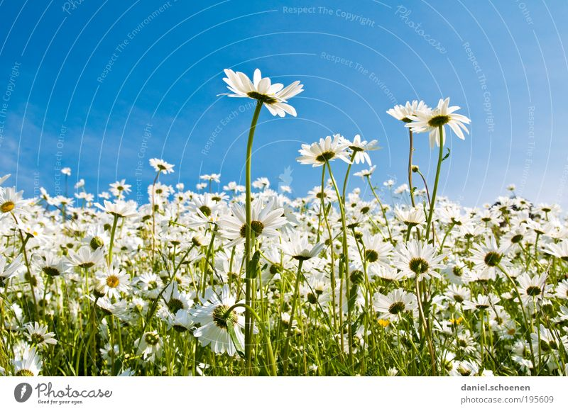 Picnic with view Vacation & Travel Trip Summer Summer vacation Sun Environment Nature Plant Spring Beautiful weather Flower Grass Meadow Blue Green White