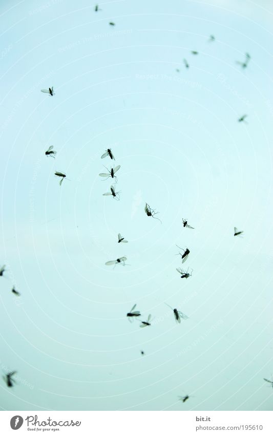 Sky Blue Animal Death Air Fly Dangerous Group of animals To fall Insect Past Pain Hang Trap Transparent Destruction