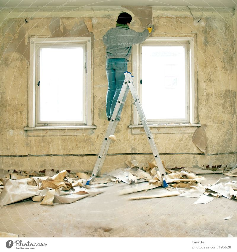 renovation Home improvement Living or residing Flat (apartment) Redecorate Wallpaper Room Craft (trade) Ladder Human being Woman Adults 1 Wall (barrier)