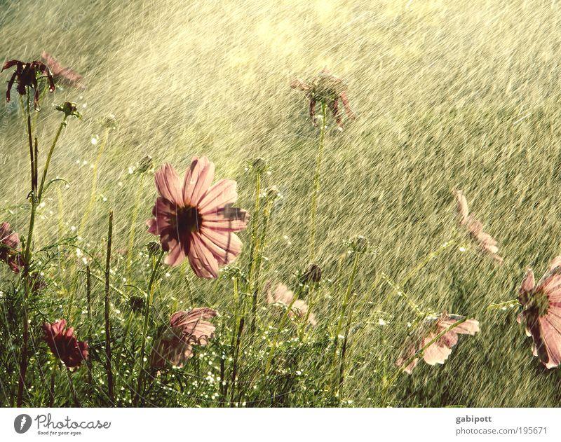 Nature Beautiful Plant Summer Flower Life Landscape Grass Happy Garden Park Rain Contentment Drops of water Happiness Bushes