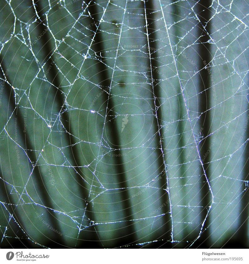 Animal Dark Lifestyle Safety Roof Threat Net Protection Catch Breathe Safety (feeling of) Pet Spider Spider's web Spin Spider legs