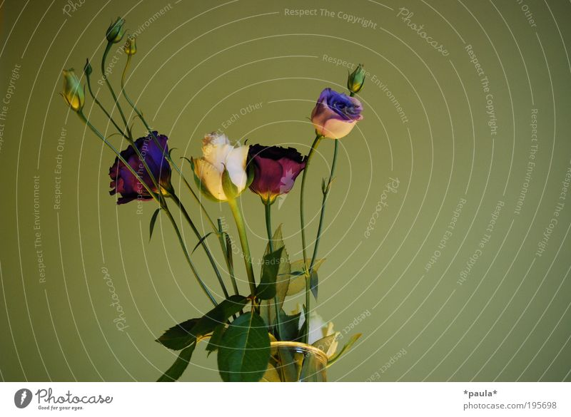 Beautiful White Flower Green Calm Leaf Blossom Spring Dream Elegant Success Rose Esthetic Growth Romance Soft