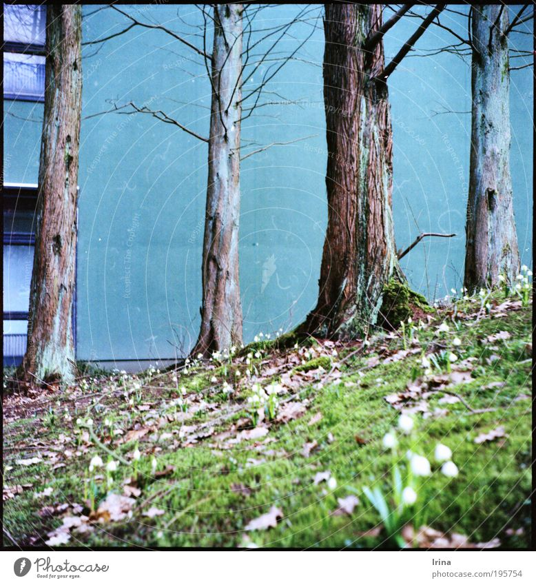 ascent Plant Bochum Academic studies Wall (barrier) Wall (building) Window Concrete Blue Brown Gray Green jade Analog Exterior shot Deserted Worm's-eye view