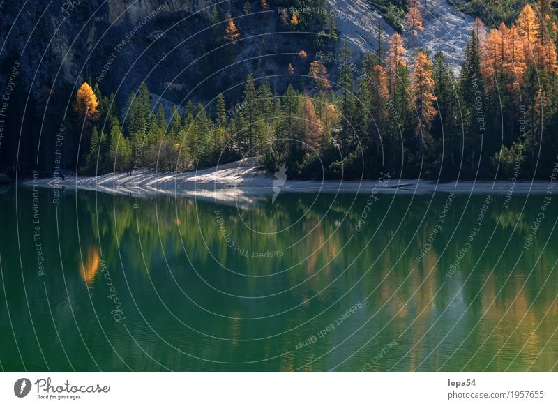 Autumnal reflection at the Braies Lake, Dolomites, South Tyrol Environment Nature Landscape Plant Water Sunlight Beautiful weather Tree Larch Forest Rock Alps