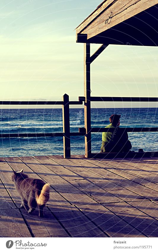 A house by the sea Happy Relaxation Vacation & Travel Waves Coast Ocean Cat 1 Animal Wood Authentic Simple Safety (feeling of) Calm Wanderlust Meditative