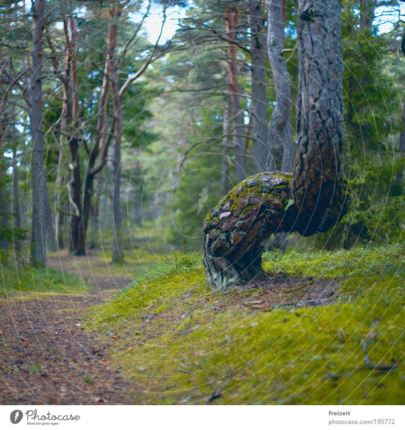 Curved paths Nature Tree Moss Forest Lanes & trails Walking Exceptional Colour photo Exterior shot Deserted Day Shallow depth of field