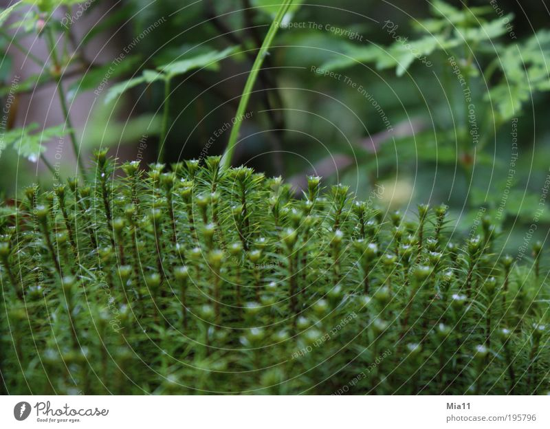 mossy Nature Plant Summer Moss Foliage plant Wild plant Growth Green Wet Wilderness Bolster Leaf Life Colour photo Exterior shot Day
