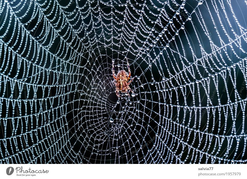 baptisers Nature Plant Air Drops of water Animal Spider Spider's web Cross spider 1 Touch Wait Esthetic Cool (slang) Fresh Wet Natural Gray Black Silver Serene