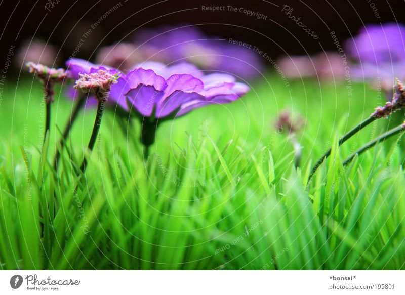 Nature Flower Green Life Meadow Blossom Grass Spring Energy Free Fresh Happiness Growth Violet Decoration Joie de vivre (Vitality)
