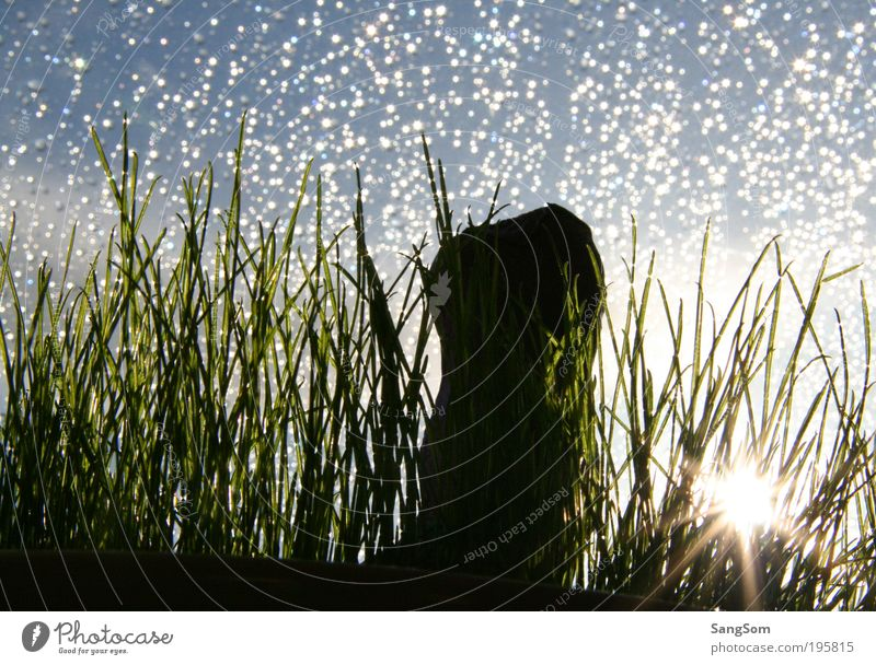 Happy Easter Drops of water Sky Spring Rain Grass Simple Sunbeam Silhouette Colour photo Interior shot Copy Space top Back-light