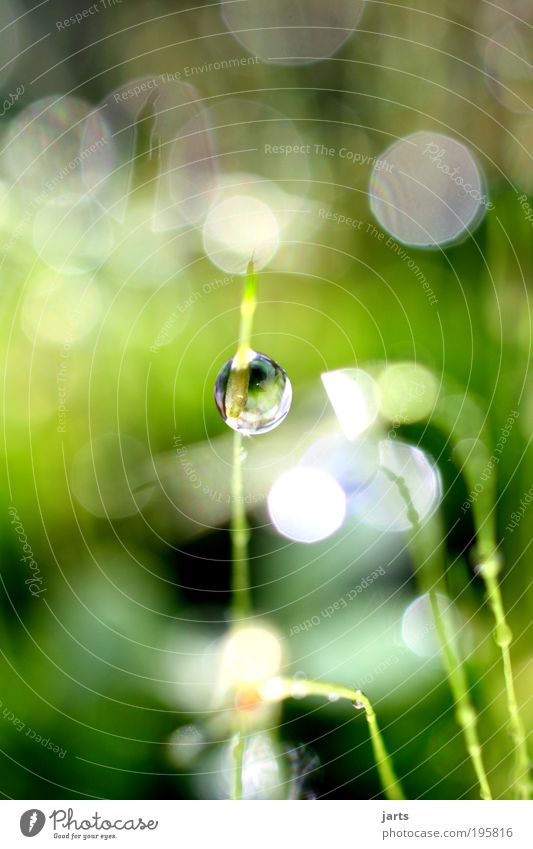 small refreshment Environment Nature Water Drops of water Sunlight Spring Summer Climate Weather Beautiful weather Grass Moss Meadow Fresh Bright Wet Natural