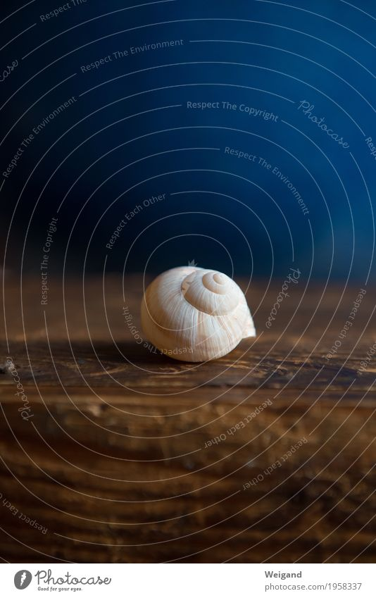 wisdom maze Harmonious Well-being Contentment Senses Relaxation Calm Meditation Snail 1 Animal Breathe Beautiful Blue Brown Honor Acceptance Trust Grateful