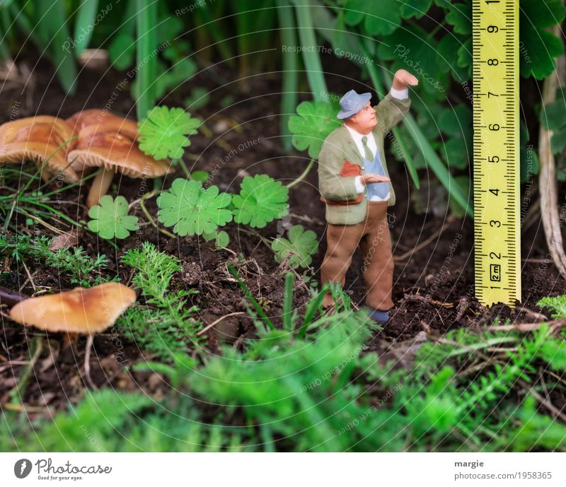 Miniwelten - Size comparison Gardening Agriculture Forestry Measuring instrument Human being Masculine Man Adults 1 Plant Animal Grass Bushes Leaf Foliage plant