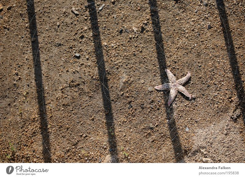 Beach Loneliness Animal Sand Simple Justice Penitentiary Politics and state Grating Thorny Coast Flotsam and jetsam Confine Starfish Bottom of the sea