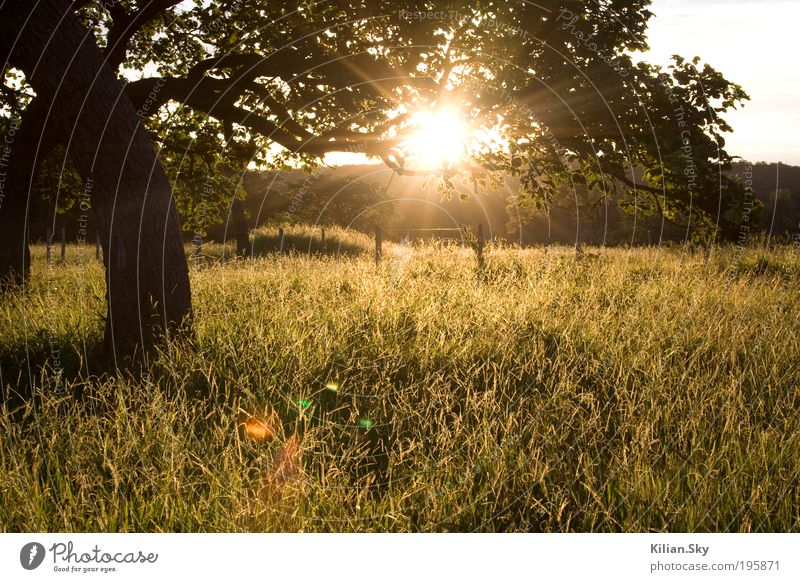 Nature Vacation & Travel Tree Sun Summer Calm Relaxation Far-off places Landscape Meadow Autumn Grass Spring Freedom Contentment Climate