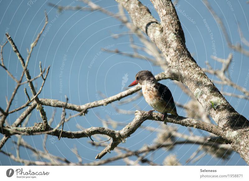 Nature Tree Animal Winter Environment Autumn Natural Bird Wild animal Near Animal face Beak Kingfisher