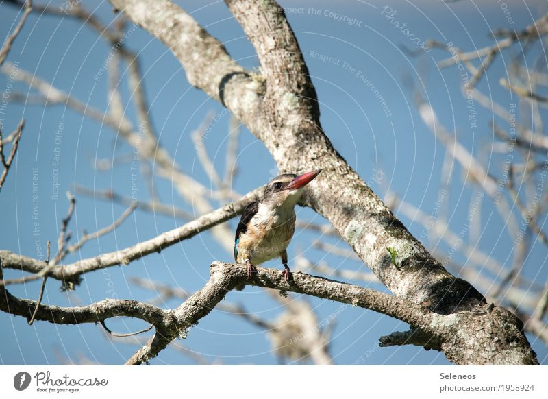 Tree Animal Far-off places Natural Small Freedom Bird Wild animal Near Animal face Expedition Safari Kingfisher