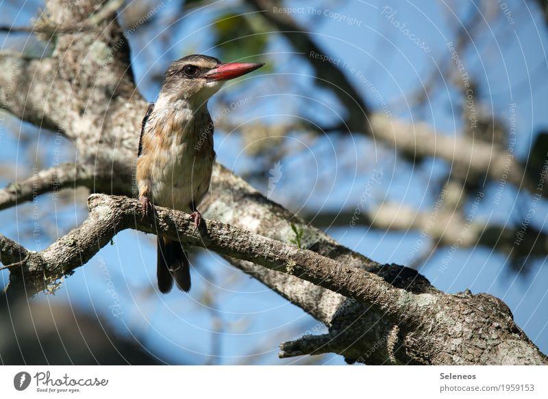 Nature Plant Beautiful Tree Animal Environment Small Bird Wild animal Esthetic Branch Near Exotic Animal face Beak Branchage