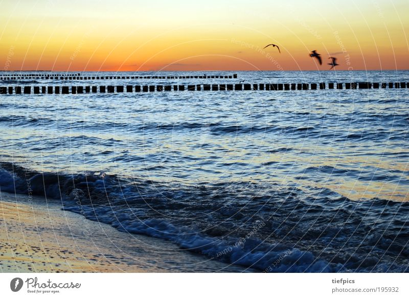Water Sun Ocean Blue Summer Beach Vacation & Travel Sand Bird Waves Coast Germany Climate Baltic Sea Beautiful weather Seagull