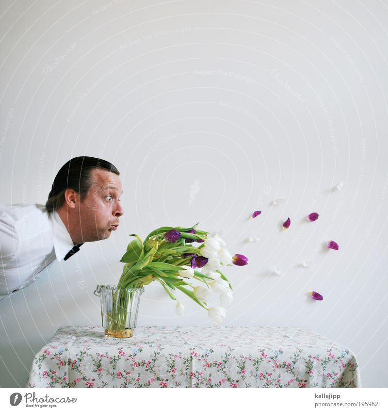 Human being White Happy Masculine Birthday Flower Desire Table Furniture Gale Dandelion Blow Shirt Bouquet Tulip Events