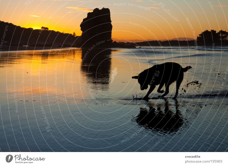 Nature Water Sky Ocean Joy Animal Happy Dog Sand Landscape Air Contentment Power Waves Coast Environment