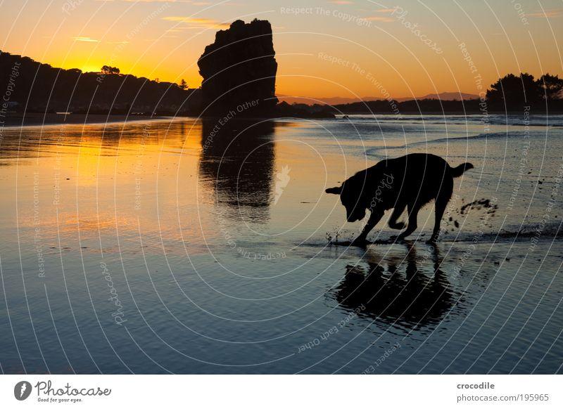 Nature Water Sky Ocean Joy Animal Happy Dog Sand Landscape Air Contentment Power Waves Coast Environment