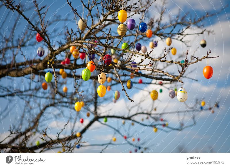 Nature Sky Tree Blue Spring Garden Park Air Feasts & Celebrations Environment Easter Jewellery Egg Light