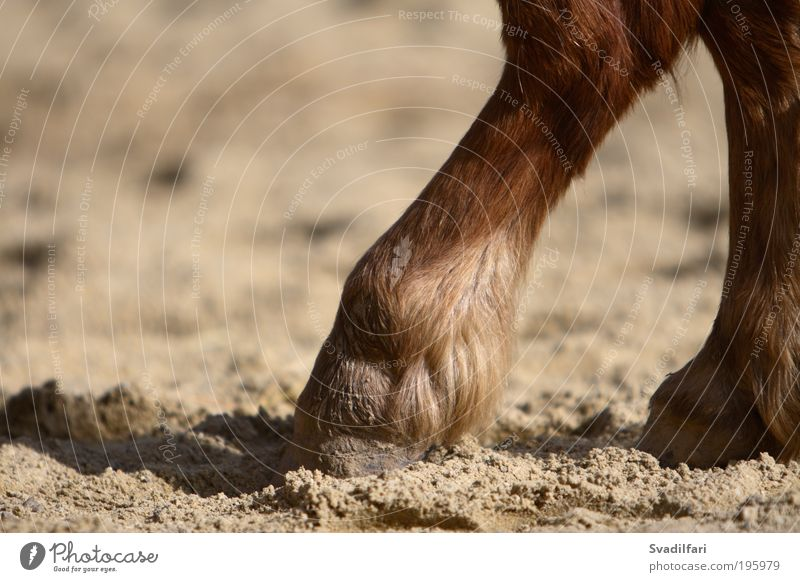 Hoof Tip Animal Farm animal Horse Pelt Legs Toes Pony Parts of body 1 Safety (feeling of) Caution Serene Calm Fatigue Comfortable Break Inspiration Colour photo