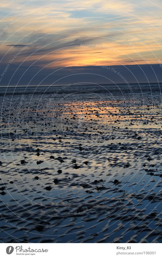 Sunset in the Wadden Sea Landscape Elements Water Sky Horizon North Sea Ocean Mud flats bunch Relaxation Dream Fantastic Infinity Sustainability Wet Natural