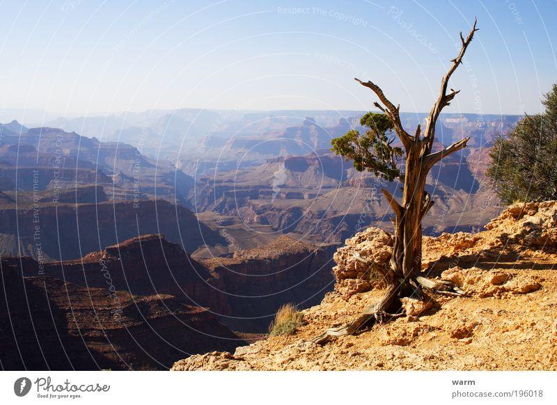 Nature Tree Blue Calm Yellow Gray Landscape Brown Environment Earth Desert Beautiful weather Wanderlust Canyon USA Grand Canyon